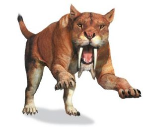 saber-tooth-cat