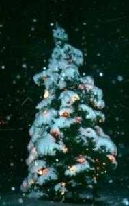 Christmas tree in snow CPNY2002