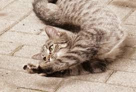 Cat stretch creative commons wikimedia